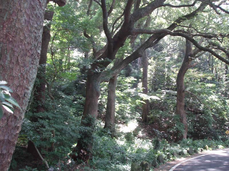 半島の遊歩道から見る樹木